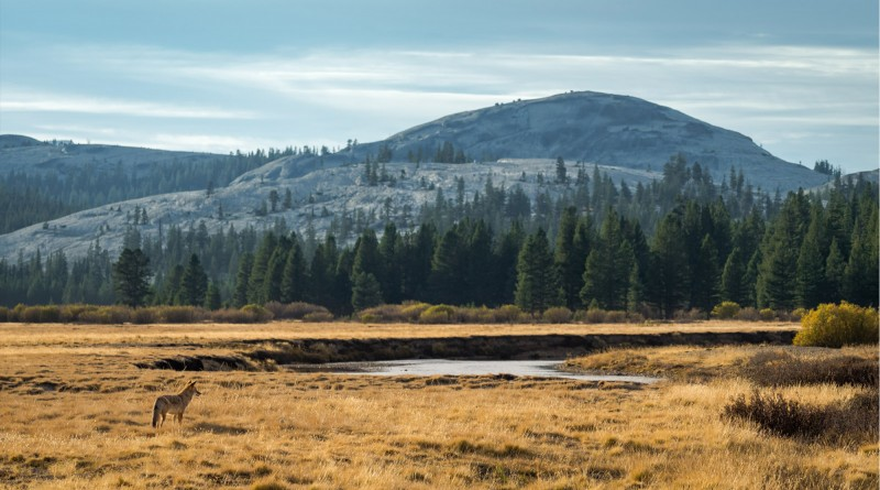 Tolumne Meadows