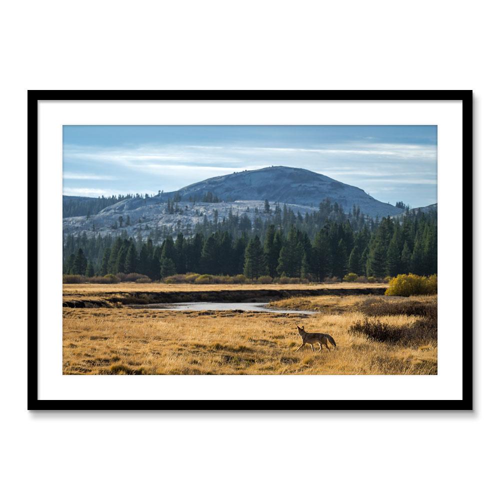 Yosemite Roadtrip