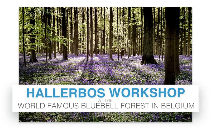 Hallerbos Workshop with Chris Eyre-Walker
